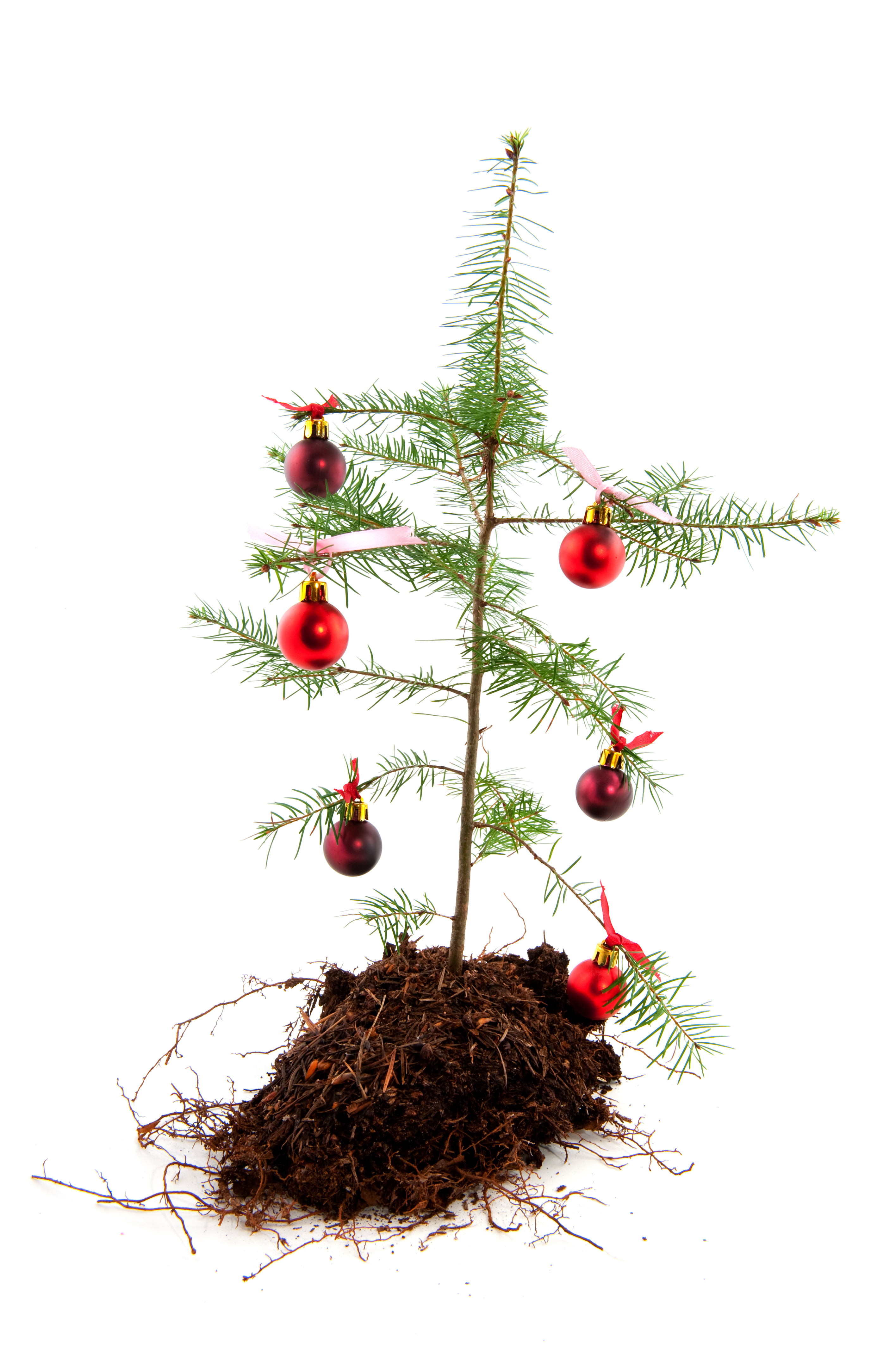 miserable xmas tree