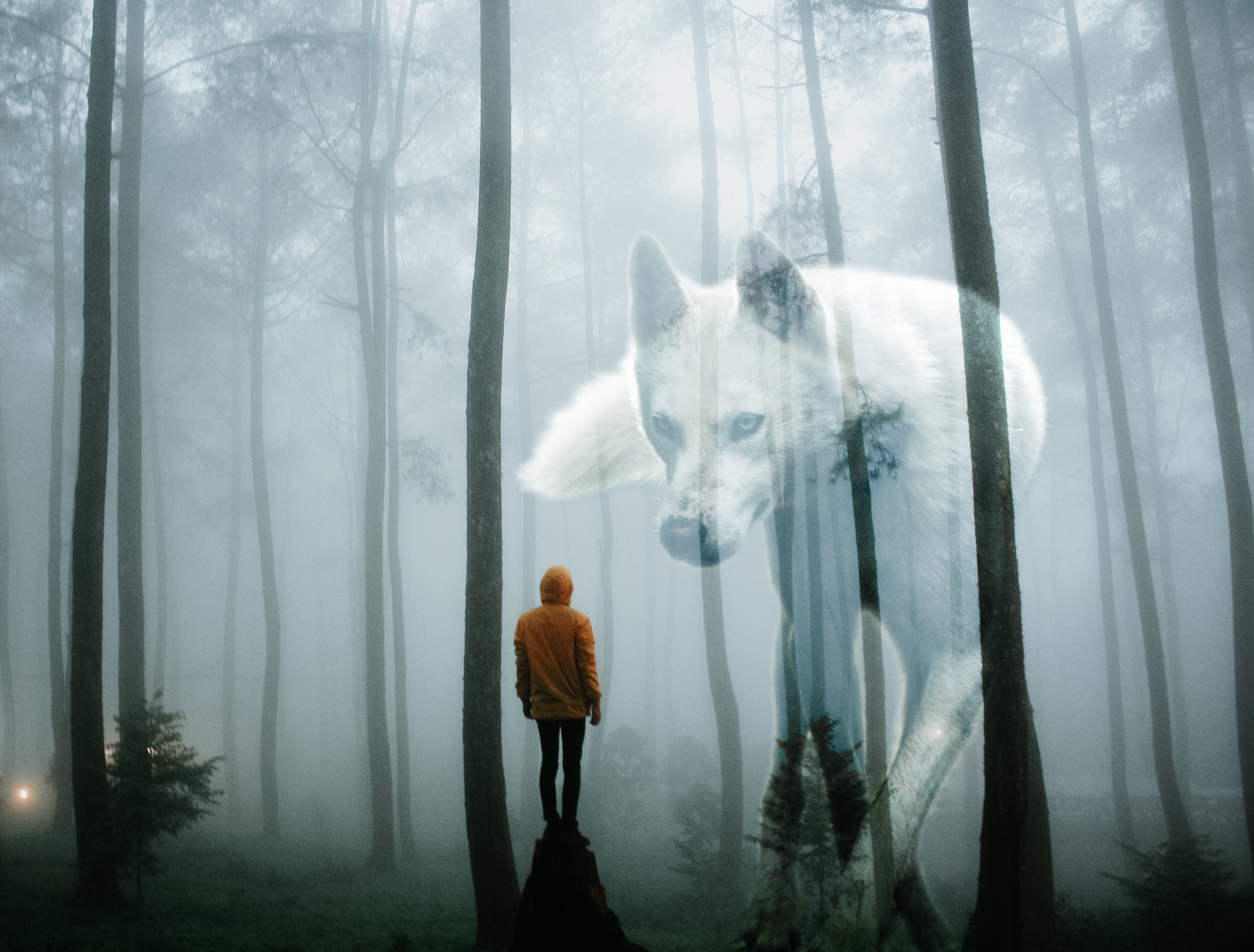 Person in facing wolf in forest